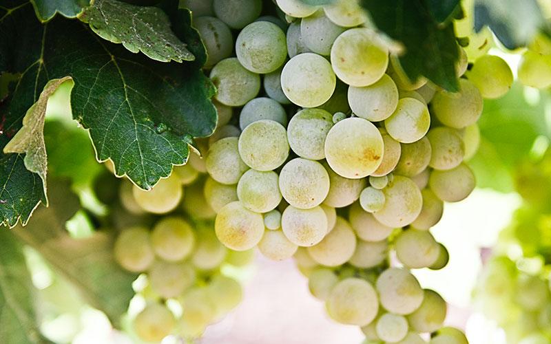 2103-corso-viticoltura-bio