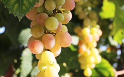 Corso di viticoltura biologica